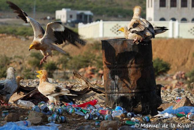Garbage dump socotra