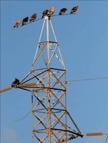 Roosting_pylons
